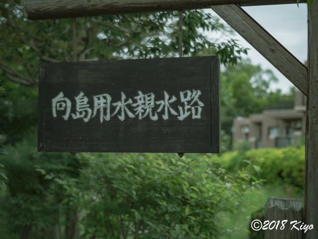 E5192566_CameraRAW_2048_signed.jpg