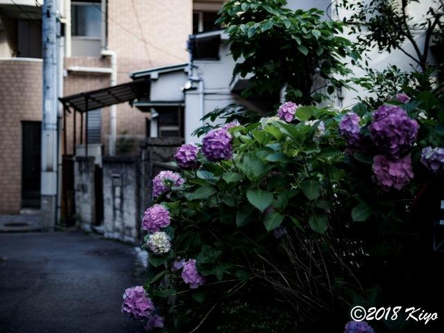 E6032811_CameraRAW_2048_signed.jpg