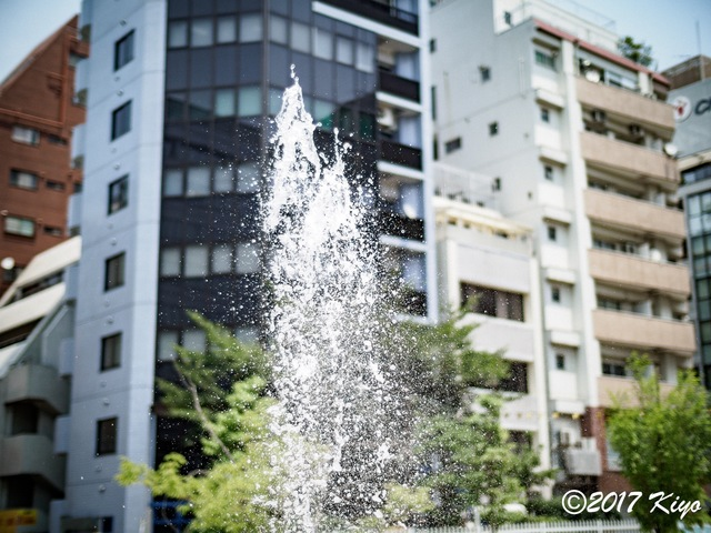 E7086840_CameraRAW_2048_signed.jpg