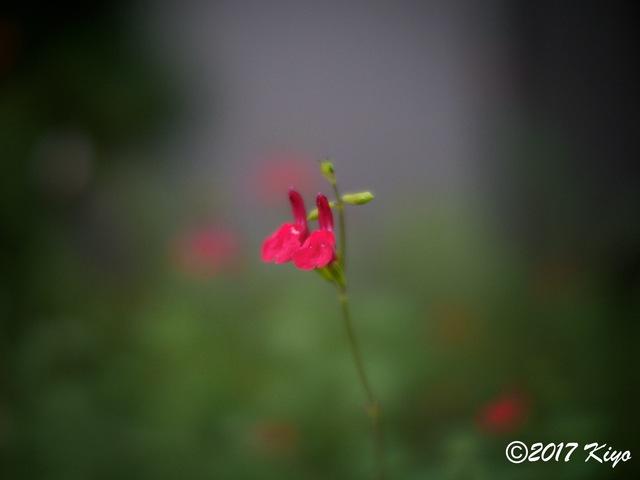 E9031052_CameraRAW_2048_signed.jpg