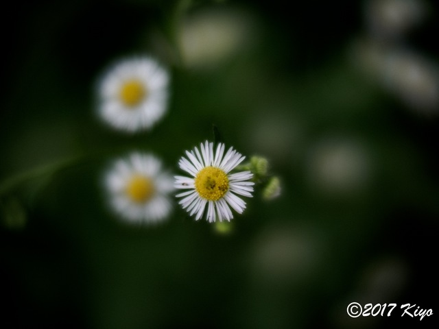 E9031070_CameraRAW_2048_signed.jpg