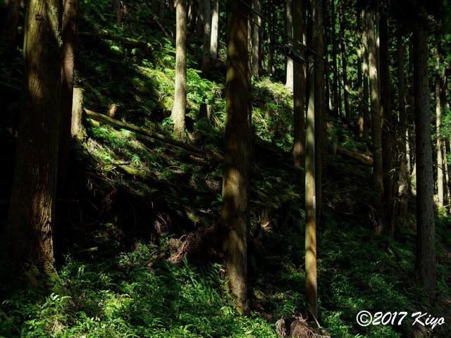 E9293146_CameraRAW_2048_signed.jpg