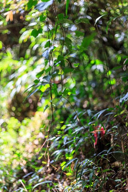 5D3_6132_CameraRAW_2048.jpg