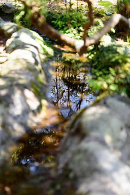 DSC_0675_CameraRAW_2048.jpg