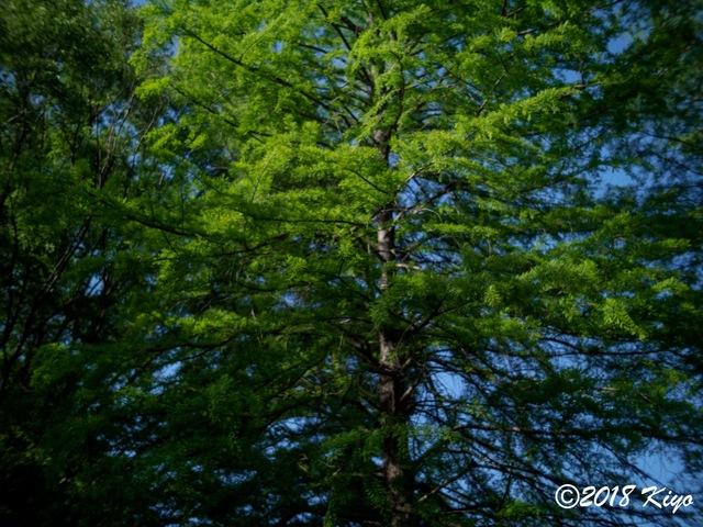 E5052427_CameraRAW_2048_signed.jpg