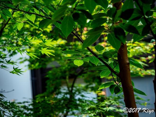 E5131279_CameraRAW_2048_signed.jpg