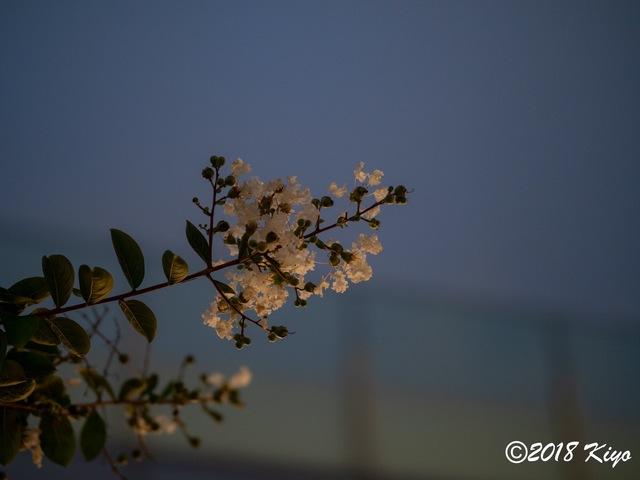 E8285141_CameraRAW_2048_signed.jpg